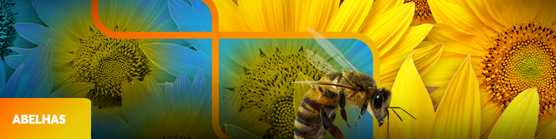 0000-abelhas