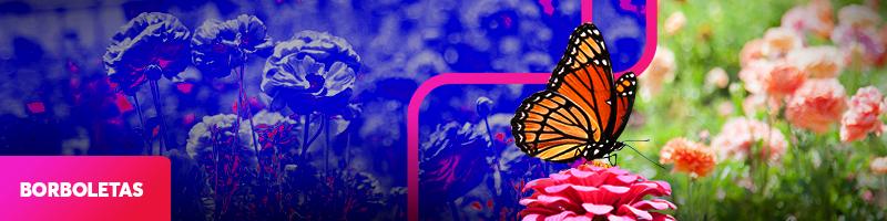 0000-borboletas