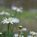 Uma Flor, Dois Olhares