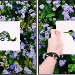 Natureza é usada por artista para redesenhar animais